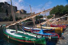 Collioure (Côte Vermeille, Pyrénées-Orientales), Port d' Amont. Barques catalanes dans le port; à l'arrière plan, le Château Royal des Templiers.