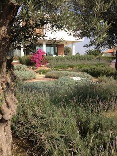 Mediterranean garden .Cyprus Designed by Maria Paraskevaidou