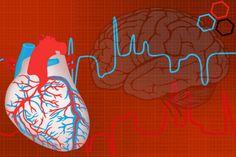 Estrutura do coração é similar a do cérebro, afirmam especialistas  | #Cérebro, #Coração, #Emoções, #HenryJom, #Memória, #Neurônios, #Neurotransmissores, #Sabedoria