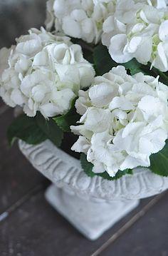 my favorite flower..hydrangeas from my Mamie's yard