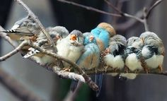 colorful birds snuggling on a branch