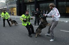That the Police no longer use dogs for riots Military Dogs, Police Dogs, Cats, Animals, Fictional Characters, Copper, British, England, Horses