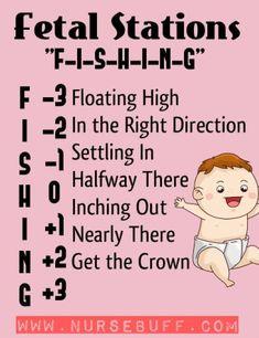 fetal-stations-nursing-mnemonics Newborn Nursing, Child Nursing, Nursing Career, Nursing Tips, Newborn Care, Nursing Students, Ob Nursing, Maternity Nursing, Medical Students