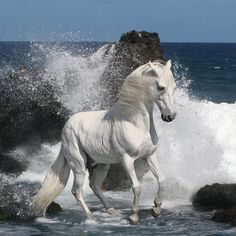 Does this horse not looked like he was formed literally from the sea foam? God's handywork.