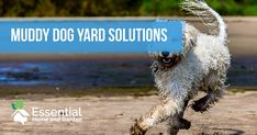 Changing the ground cover is the most obvious solution to solving the mud created when dogs run the same paths through the yard. Choosing the right ground cover often means finding one that is within the owner's budget which is also safe for the dog.