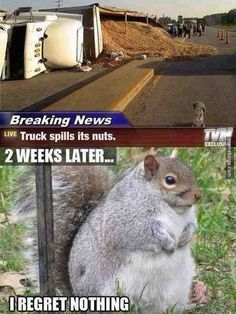 Funny pictures about Chubby squirrel regrets nothing. Oh, and cool pics about Chubby squirrel regrets nothing. Also, Chubby squirrel regrets nothing. Animal Jokes, Funny Animal Memes, Funny Animal Pictures, Cute Funny Animals, Funny Animal Videos, Funny Cute, Really Funny, Funny Photos, Funny Jokes