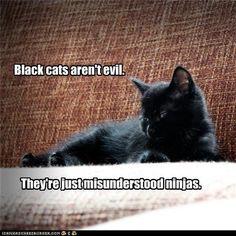 ninja kitty <3