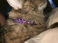 New fancy purple paracord kitty collar for my cat JuJu. It comes with a safety release and a bell.