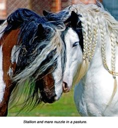 if i ever own horses i am totally doing this