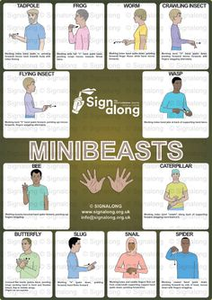 Mini Beasts Poster, J) Posters, Signalong Store Sign Language Chart, Sign Language Phrases, Sign Language Alphabet, Learn Sign Language, British Sign Language, Baby Asl, Makaton Signs, Eyfs Activities, Asl Signs