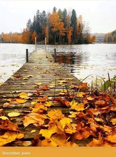 Fall Pictures, Fall Photos, Nature Pictures, Beautiful Places, Beautiful Pictures, Autumn Scenes, Autumn Aesthetic, Autumn Photography, Best Seasons