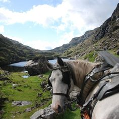 In addition to being the world's most scenic drive, there is plenty to see and do along the way. Here are hidden treasures along the Ring of Kerry, part of Ireland's Wild Atlantic Way. Dive in and discover the best of Ireland.