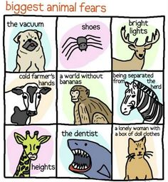 LOL at the cat one