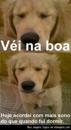 ai a preguiça kkk 100 Memes, Funny Memes, Hilarious, Jokes, Animals And Pets, Cute Animals, Nerd, Dog Cat, Comedy