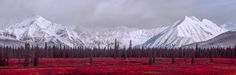 a denali christmas - The weather cleared after a snowfall allowing me to create this wonderful snowy Alaska panorama. This truely is the middle of nowhere near the north pole. Alaska, Wildlife, Weather, North Pole, Mountains, Nature, Christmas, Landscapes, Middle