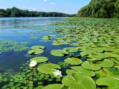Hungary - Tisza tó