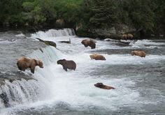 Eight bears in one photo