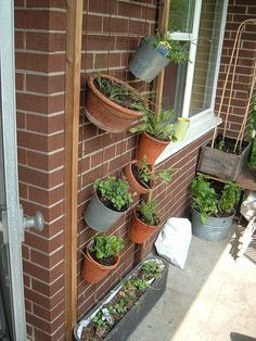backyard with victory garden | Victory Garden Container Trellis