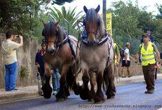 Os cavalos de raça Ardennais do Parque da Pena