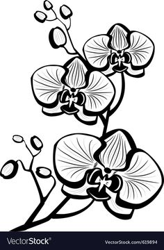 moth orchid coloring pages - photo#48
