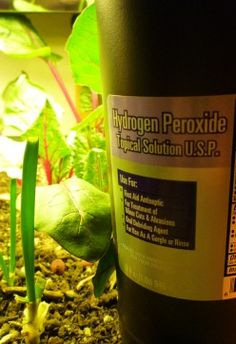 Add a little hydrogen peroxide to the water when you water plants. Great for soil aeration.