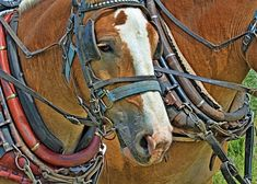 Image Gifts, Canvas Art, Canvas Prints, Mugs For Sale, Gifts For Horse Lovers, Draft Horses, Custom Canvas, Beautiful Horses, Fine Art America
