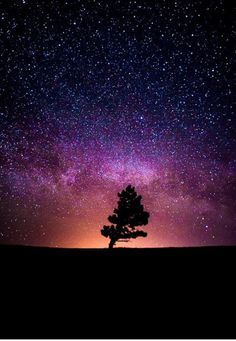 Space: Milky Way, Stars and the Tree – Galaxy Art Landscape Photography, Nature Photography, Astronomy Photography, Milky Way Stars, Sky Full Of Stars, Galaxy Art, Galaxy Wallpaper, Wallpaper Space, Trendy Wallpaper