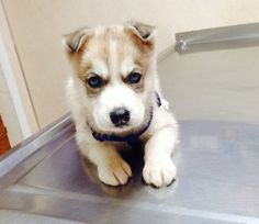 """I'm only here because you promised I would get a new squeaky toy out of this."" 