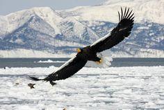 Drift ice and birdwatching cruise in Shiretoko, Hokkaido - HokkaidoExperience.com