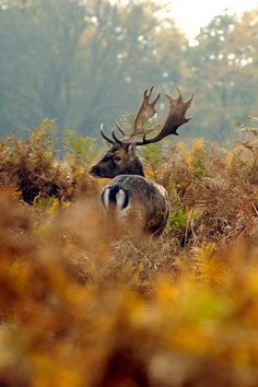 This picture: a deer roams in Richmond Park in southwest London, as shot by Anthony Webb