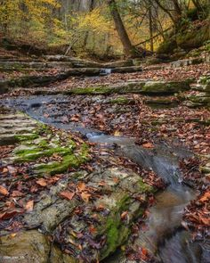 Up a creek    Kentucky #TravelKy #all_my_own  #rei1440project #hike #hikekentucky #explorekentucky  #roamkentucky  #rsa_nature  #kentuckykicksass  #kentuckygram  #allnatureshots #bestnatureshots #nature_perfection #drivekentucky #neverstopexploring #lifeofadventure #nikonphotography  #ig_great_pics #rsa_rural #Kentucky #shoplocalky #kentuckygram #trail #unrealnature #fall #lexington #sharethelex #nikon #longexposure by the_lowe_life