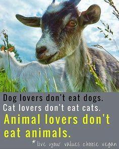 Live vegan  animal lovers don't eat animals #vegan                                                                                                                                                                                 More