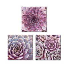 Succulent Print Set, Purple Succulent Art Photos, Succulent Prints, Succulent Plant Photos, Botanical Art, Set of 3, Botanical Wall Gallery by PaulaGoffPhotography on Etsy https://www.etsy.com/listing/268944251/succulent-print-set-purple-succulent-art