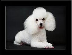 i know it doesn't look like it but i'm 77 in dog years ever since i got that hair cut