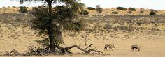 Botswana Adventure Safari - Rate: From US$3,590.00 for 11 Nights
