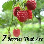 7 Berries that are so easy to grow