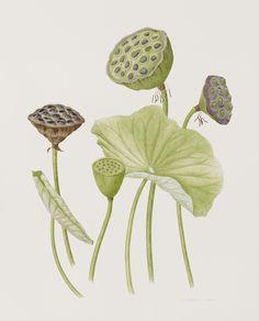 Koi Kunst, Lotus Kunst, Lotus Art, Chinese Drawings, Fish Drawings, Chinese Art, Water Lilies Painting, Lotus Painting, Pichwai Paintings