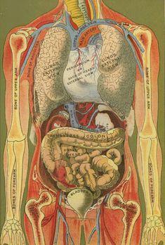 Female Anatomy Diagram Lower Abdomen | Stomach Pics