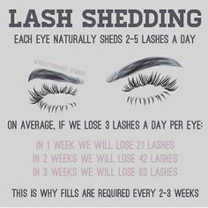 "252 Likes, 11 Comments - Certified Lash Technician (@lashed_byriri) on Instagram: ""Lash shedding is the reason you should be maintaining your lashes with refills every 2-3 weeks. You…"""