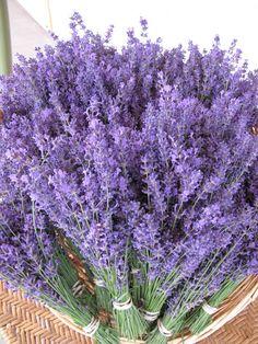 Freshly harvested lavender from Lockwood Lavender Farm...