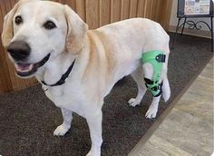 14 Best Splints and Braces images in 2017   Paralyzed dog