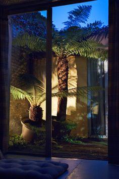 Converted Warehouse, Tree Fern lighting