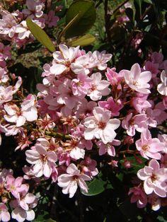 248 best landscape gardening plants images on pinterest native top 10 salt tolerant plants for south australia altavistaventures Images