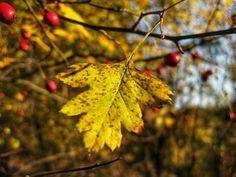 #autumn #autumncolours #memories #autumnleaves #autumnleaf #leaf #yellowleaf #yellowleaves #colourful #colours #yellow #red #goldautumn #goldleaves #branch #branches #plant #plants #stem #nature #beauty #beautiful #amazing #wonderful #naturelover #naturephotography #naturephotographer #naturephotograph #snapseed #ilikewhatisee