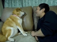 The dog who does not want or need your kisses. | 49 Of The Most Important Dog GIFs Of All Time