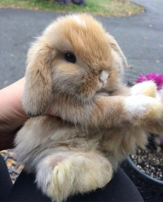 9 Cutest Baby Animals in the World Cute Baby Bunnies, Baby Animals Super Cute, Cute Little Animals, Cute Funny Animals, Cute Babies, Lop Bunnies, Cute Puppies, Cute Dogs, Cute Animal Pictures