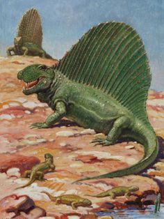 Dimetrodon by Charles R. Knight Ω National Geographic Stock Dinosaur Age, The Good Dinosaur, Prehistoric World, Prehistoric Creatures, Extinct Animals, Fauna, Natural History, Mammals, Knight
