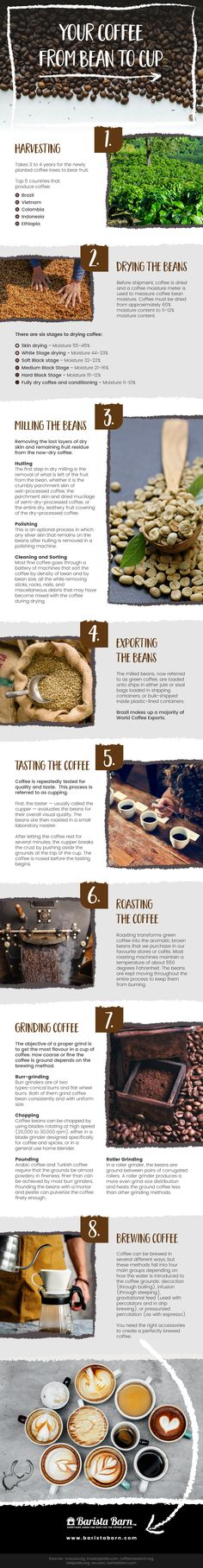 The world of coffee is more complex than we ever thought, so it's time to brush up on your coffee knowledge (whilst sipping on a cup of your favourite roast, of course) and get to know more about the journey and the processes involved behind your favourite caffeinated beverages. #coffee #infographics #arabica #coffeelovers #coffeeholics  #wellness Coffee Plant, Infographics, Roast, Beverages, Beans, Knowledge, Journey, Wellness, Coffee Flower