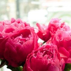 blair waldorf x pink peonies