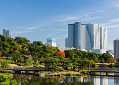 Where to view cherry blossoms, enjoy a summer picnic, admire the fall leaves or stroll through the winter greenery. The 20 top picks of Tokyo Japanese gardens, whenever you visit! Tokyo Guide, Tokyo Travel Guide, Japan Travel, Odaiba, Tropical Greenhouses, Cherry Blossom Season, Cherry Blossoms, Ueno Park, Temple Gardens